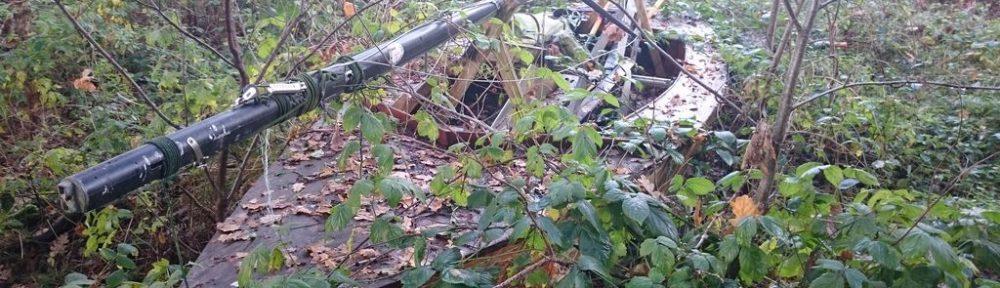 Holzpirat verrottet im Wald DSC
